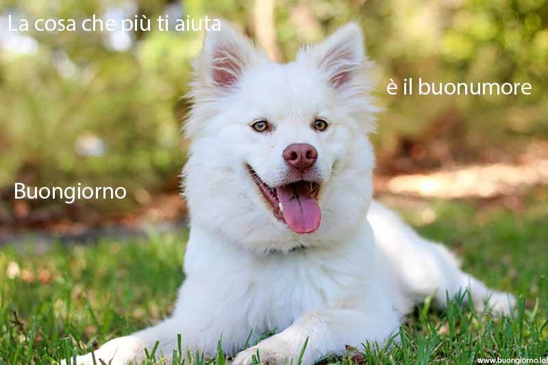 Cane bianco felice sdraiato su un prato