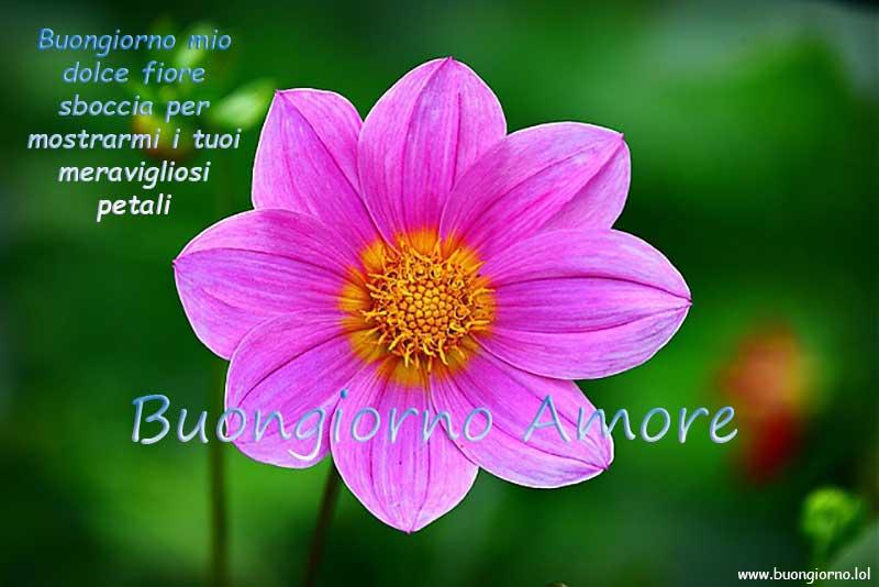 Grande fiore viola