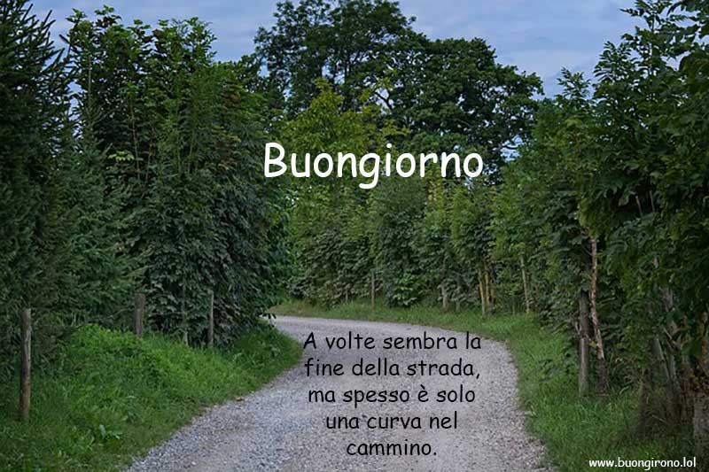 Una strada con una curva alla fine circondata da alberi