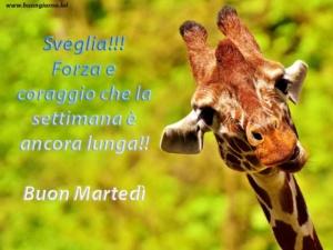 foto di una giraffa che sorride in primo piano