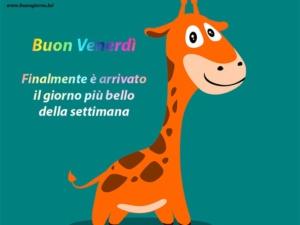 giraffa in primo piano