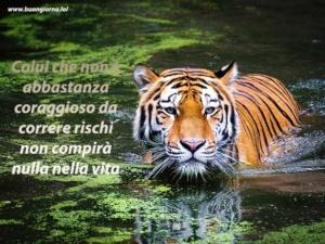grande tigre dentro un fiume