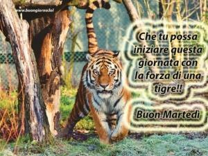 foto di una tigre in primo piano