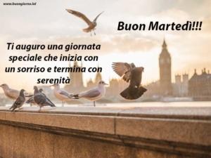 vari tipi di uccelli sopra un ponte con sullo sfondo una città
